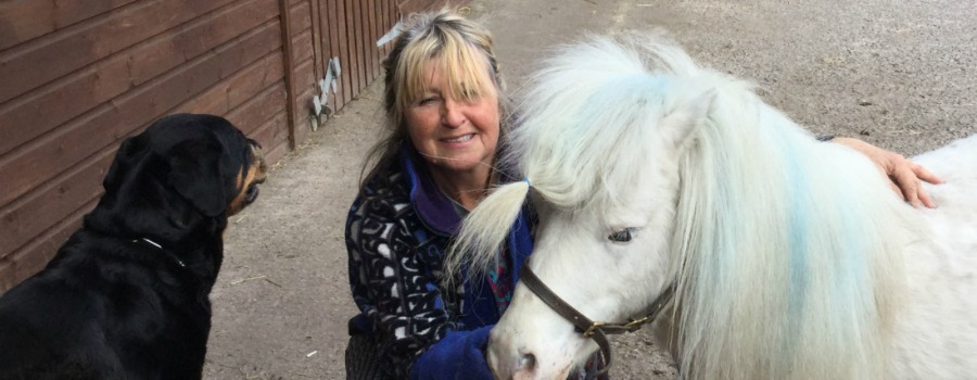 Ponies mauled – but who was the mystery dog owner who left £200 and a false name?